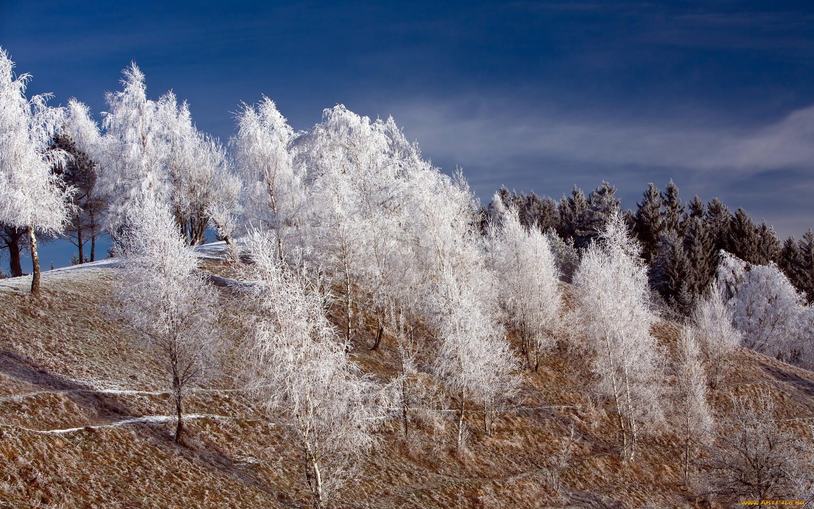 раскраски точкам, иней на деревьях фото пару минут